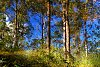 -reflections-forest.jpg