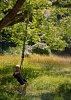 -d-tree.jpg