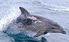 -dolphin.jpg