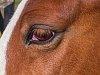 -horseeyecloseupa.jpg