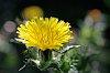 -little-weed_med.jpg