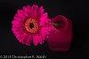 -flower-florence.jpg