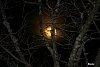 -moon-trees.jpg