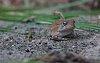 -toad.jpg