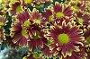 -flowers-lsd.jpg