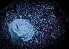 -ice-flower_2013jan03_5903_1-2.jpg