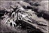 -abandoned-beaver-dam-antrim-county-michigan-john-rivard.jpg