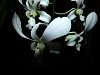 -longwood-orchid.jpg