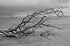 -branches-2-1-1-.jpg