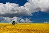 -prairie.jpg