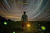 -stars-fireflies-4.jpg