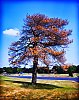 -tree9565tadjust11x14small.jpg