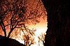 -warm.trees.2.jpg