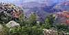 -trees-grand-canyon_0706_solomon.jpg