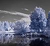 -baj_trees.jpg
