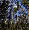 -trees_of_bruar_shrunk.jpg