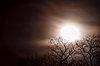 -wolf-moon.jpg