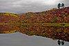 -trees-tangle-lake.jpg
