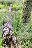 -drzewo_m_1.jpg
