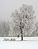 -frost.jpg