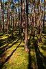 -trees_knp.jpg