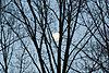 -tree-moon.jpg