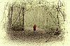-quiet_path2.jpg