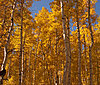 -use-aspen-changing-straight-4.jpg