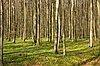 -trees.jpg