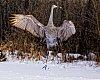 -crane-8778pentax.jpg