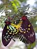 -two-butterflies.jpg