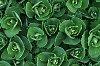 -green-pattern.jpg