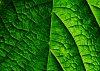 -pattern_leaf_ras2.jpg