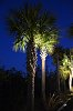 -midnight-palms.jpg