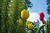 -spring-tulips-copy-.jpg