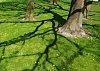 -shadows2_edited-1.jpg