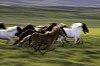 -running-horses-.jpg