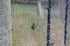 -bird-fence.jpg