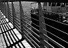 -fence-bw2293.jpg