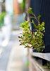-fence-vs-plant.jpg