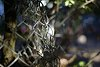 -fences.jpg