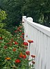 -flowers-along-white-picket-fence-resized.jpg