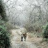 -forest.jpg