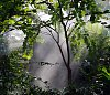 -calloway-gardens-6-1-11-082.jpg