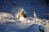 -snow2012.jpg