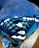 -blue.jpg