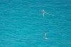 -imgp3672_longtail_bird_bermuda_southampton_thereefs.jpg