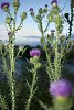 -20100809-family-night-river-thistles-imgp0591.jpg