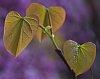 -love-leaves.jpg