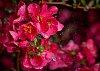 -spring_rain.jpg